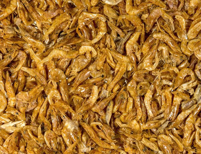 Shrimps 2-3cm