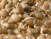 Seeschnecken