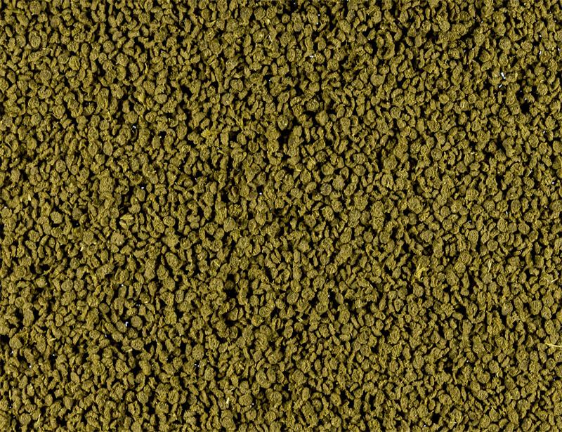Cichliden Bits Grün