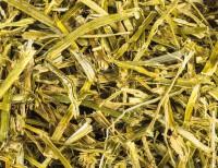 Alfalfa Luzerne