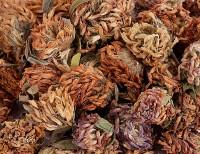 Rotkleeblüten