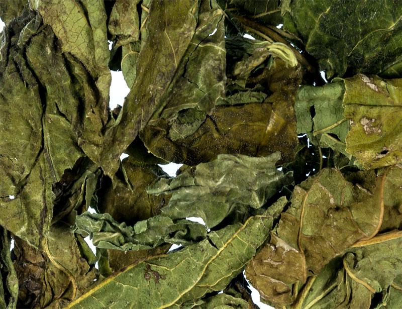 Sonnenhutblätter (Echinacea)