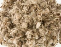 Baumwolleinstreu