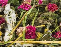 Blütenfutter