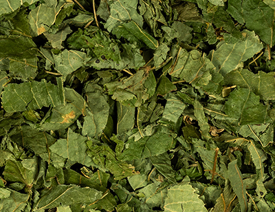 Linden leaves cut