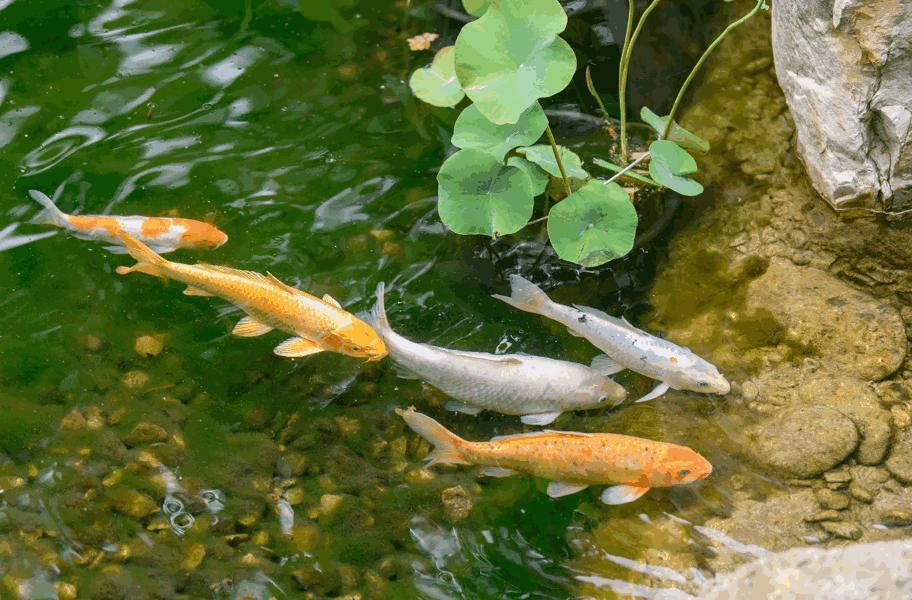 Pond food wholesale