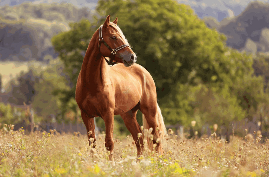 Horse Feed Wholesale