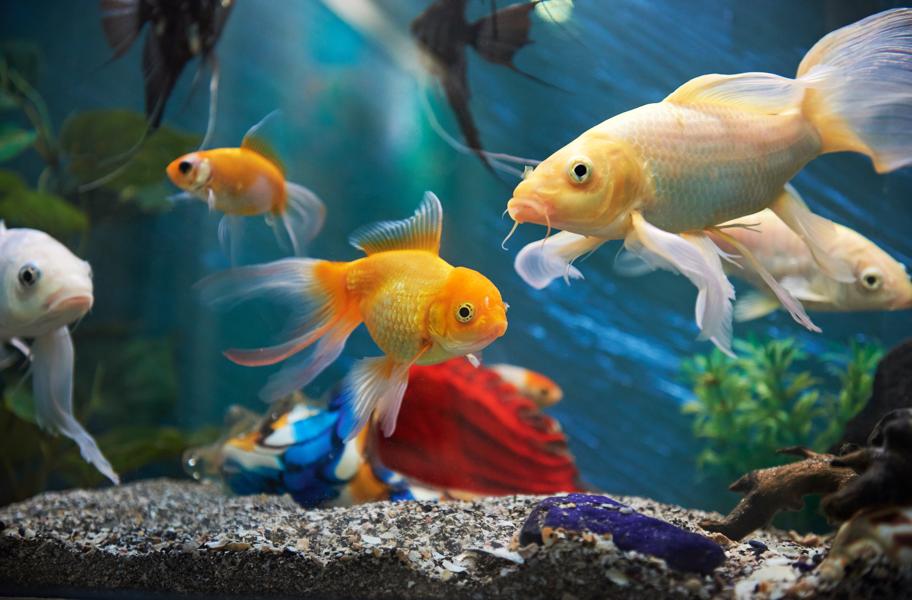 Tropical Fish food Wholesale